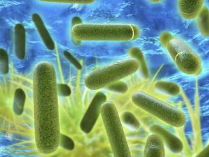 Legionella-Services-300x2251